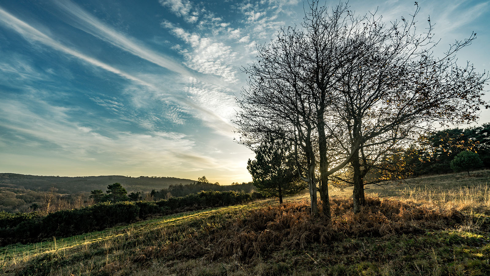 Ashdown-Forest-East-Sussex