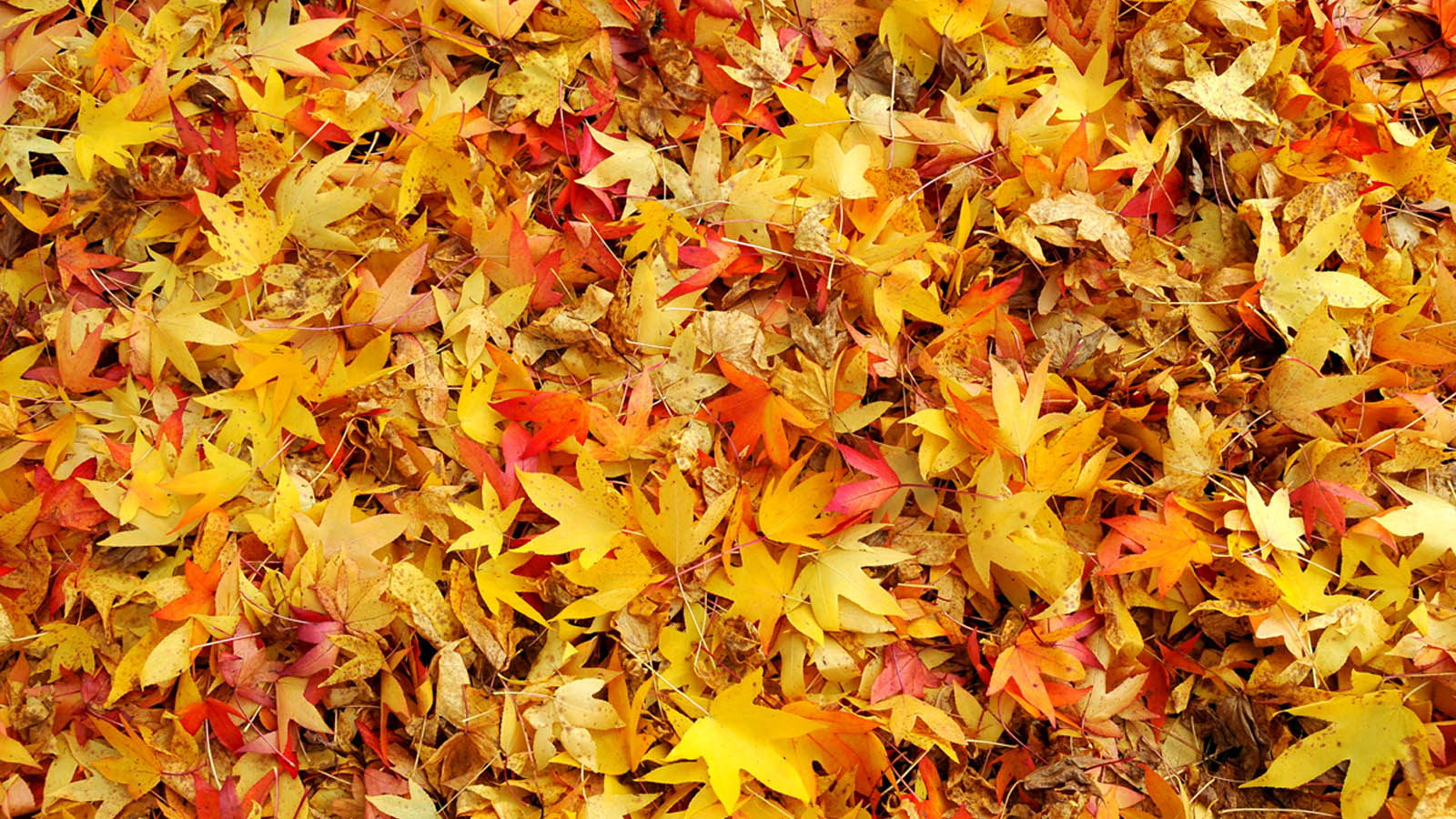 pleasant sounds john clare A friday poem for the autumn equinox by john clare.