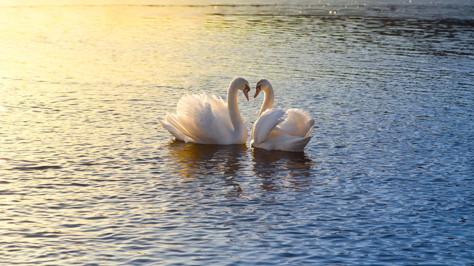 Swans Have Come Back >> Friday Poem: 'The Wild Swans at Coole'