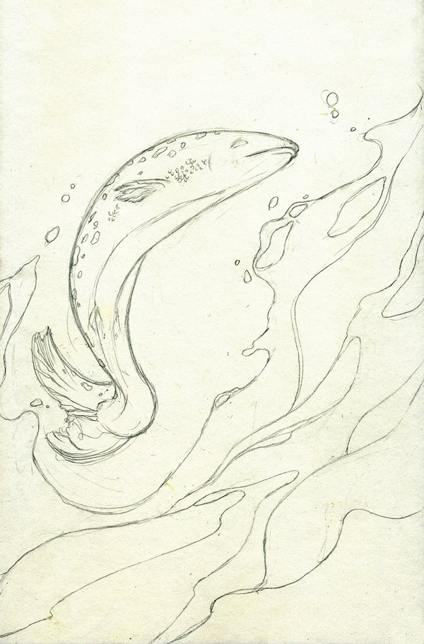 first rough draft of the salmon who dared to leap higher cover