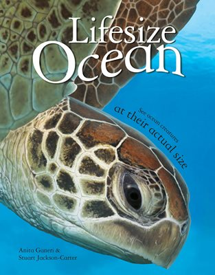 Book cover for Lifesize Ocean