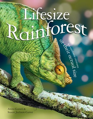 Book cover for Lifesize Rainforest